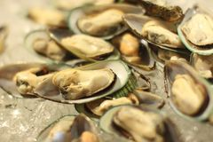 Chilled mussels Stock Image