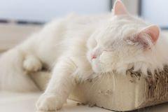 Chilled out cat taking a nap on his favourite spot by the window Stock Photos