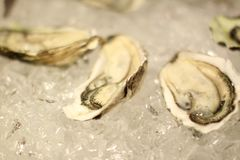 Chilled oysters Royalty Free Stock Image