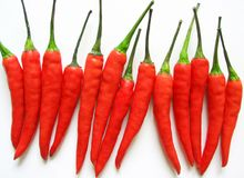 Chilli. Produce - Chilli royalty free stock photos