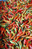 Chilli background Stock Image