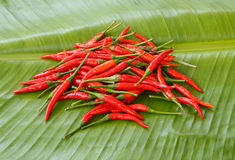 Chilli on banana leaf ,thailand. Chilli red color on banana leaf, in thailand Royalty Free Stock Photography