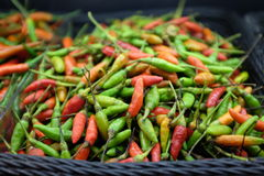 Chilli basket Royalty Free Stock Photography
