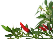 Chilli Border Background Royalty Free Stock Images