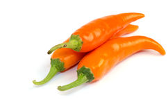 Chilli (Capsicum frutescens L.). Royalty Free Stock Photos