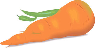 Chilli and Carrot Royalty Free Stock Photo