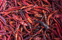 Chilli dry Royalty Free Stock Photography