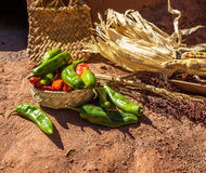 Chilli. Green and red chilli with winter corn Royalty Free Stock Photos