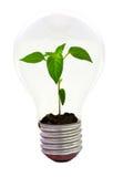 Chilli inside the light bulb Stock Photography
