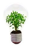 Chilli inside the light bulb Stock Photo