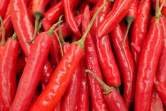 Chilli pattern. Royalty Free Stock Photography