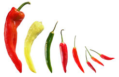 Chilli Pepper Collection Royalty Free Stock Photography