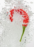Chilli pepper falling in water with air bubbles Royalty Free Stock Images