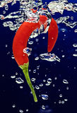 Chilli pepper falling in water  with air bubbles Royalty Free Stock Image