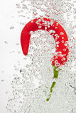 Chilli pepper falling in water on white Royalty Free Stock Photography
