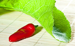 Chilli pepper and leaf of horseradish Royalty Free Stock Photos