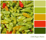Chilli Pepper Palette Stock Photography