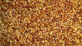 chilli pepper seeds Stock Photography