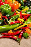 Chilli pepper still life Stock Photo