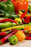Chilli pepper still life Royalty Free Stock Photos