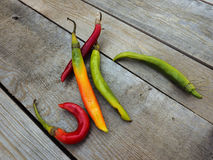 Chilli peppers. Autumn background Stock Images