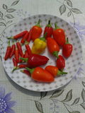 Chilli peppers. Chillies Stock Images