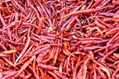 Chilli peppers. Dry Chilli peppers with  background Stock Photography