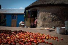 Chilli peppers dry in a village. Chilli peppers dry on the floor of a village in Ghana, Africa stock images