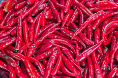 Chilli peppers. The fresh chilli peppers, closed-up Royalty Free Stock Images