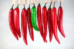 Chilli peppers. A green chilli pepper among the red ones royalty free stock photo
