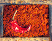 Chilli powder with a chilli pepper Stock Photography