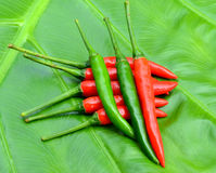 Chilli, red green Bonnie on the green. Stock Photography