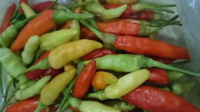 Chilli. Spicy vegetable food hot colors stock image