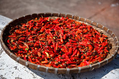 Chillies. Fresh chillies drying under the sun Royalty Free Stock Photo