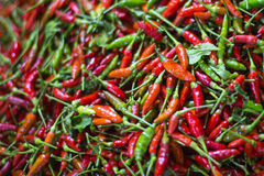 chillies Royalty-vrije Stock Fotografie