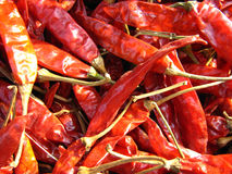 chillies czerwoni Zdjęcie Stock