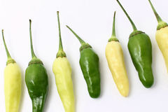 Chillies green and white Stock Images