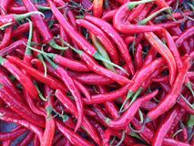 The Chillies Royalty Free Stock Photography