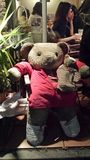 Chillin björn Royaltyfria Bilder