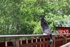 Chillin del gato afuera Imagen de archivo libre de regalías