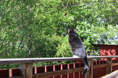 Chillin do gato fora imagem de stock royalty free