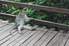 Chillin' Monkey Stock Image