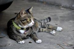 Chilling Cat Stock Image