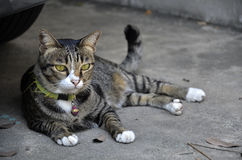 Chilling cat in the town Stock Photo