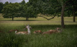 Chilling deers Stock Photo