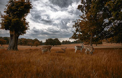 Chilling deers Stock Photography