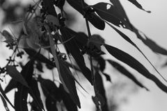 Chilling Leaves. Greyscale leaves on angle Royalty Free Stock Images