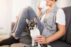 Chilling out with dog Royalty Free Stock Photo