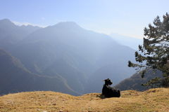Chilling out goat on mountain Stock Photo