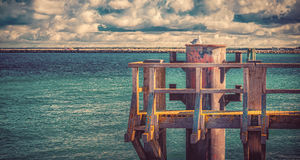 The chilling Seagull Royalty Free Stock Images